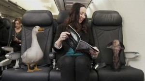 WestJet allows animal passengers to roam free on board its aircraft in a scene from the airline's April Fool's Day video.